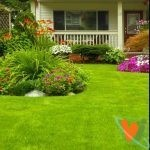 Как создать шикарный газон, который радует душу?
